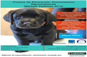 Apoyo y refuerzo educativo asistido por perros. Colegio Sta. María del Naranco