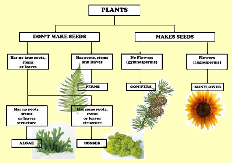 Clasification of plants